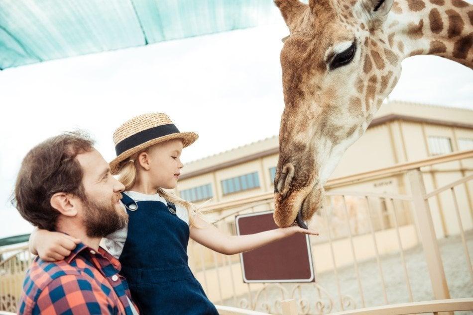Far og datter der er helt tæt på en giraf i zoologisk have